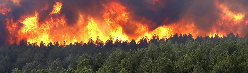 Risque de feu de forêt : les mesures de prévention à Voiron